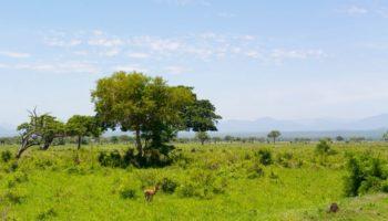 Какие опасности ждут туристов в Танзании