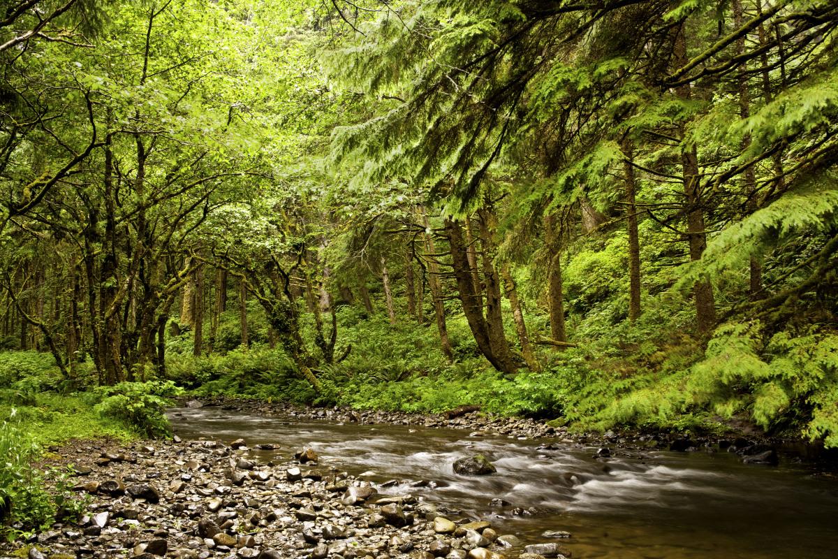 В поисках потерянного национального парка Орегон Кост