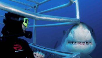 В какой стране можно поплавать с живыми акулами