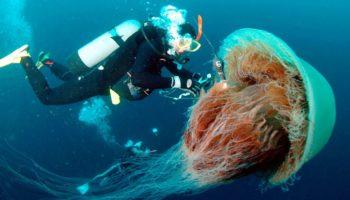 Возможно ли спастись, если оказались рядом с опасным морским жителем