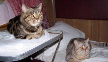 Что не учитывают при перевозке кошек на поезде