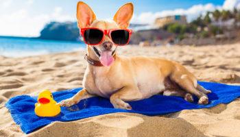 О чем нужно знать планируя путешествия с животными