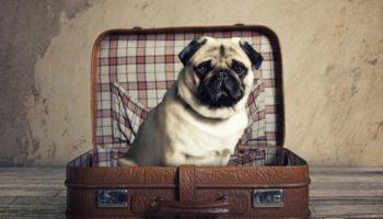 Почему могут не пустить в салон самолёта с животным