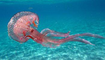 Когда отдых на Красном море может стать ужасом (сезон медуз)