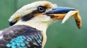 5 самых странных существ, которых можно увидеть только в Австралии