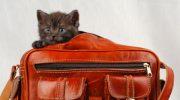Как облегчить путешествие с перелетом для кошки