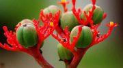 5 азиатских фруктов, от которых лучше держаться подальше