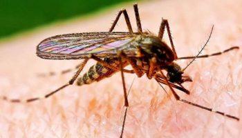 Как правильно защититься от комаров в Таиланде