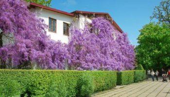 5 причин поехать на отдых в Ялту весной