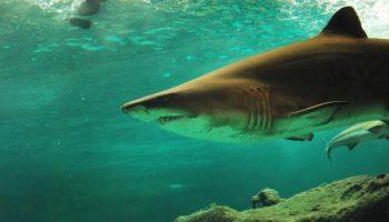 5 курортов, где туристам грозит реальная встреча с акулами