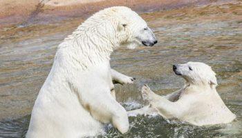 5 самых уникальных зоопарков, не имеющих аналогов во всем мире