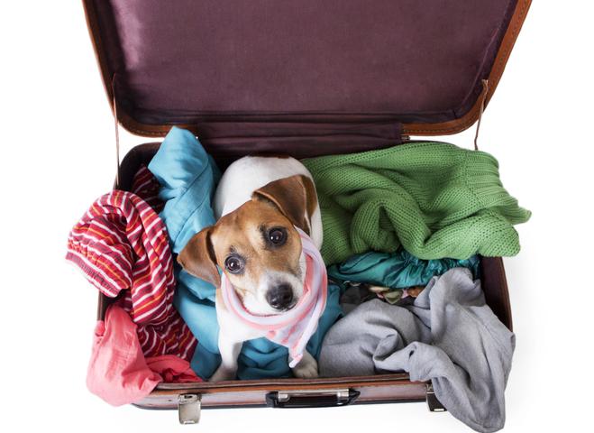 Особенности перевозки домашних животных заграницу